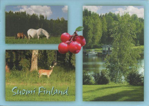 rural scene in Finland, lake, horses, deer