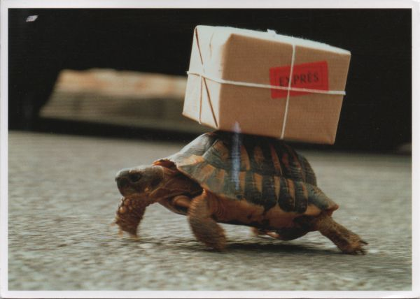 tortoise balancing a parcel on its back, labelled express
