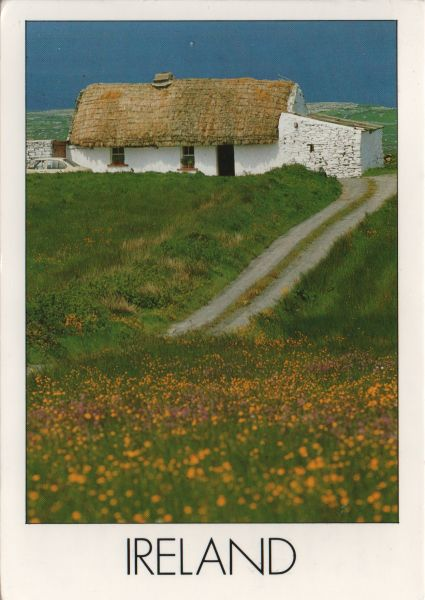thatched and whitewashed cottage in field with drive