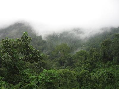 Misty Western Ghats