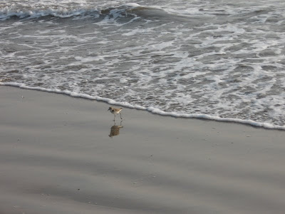 A Small bird on the sea shores of Bekal