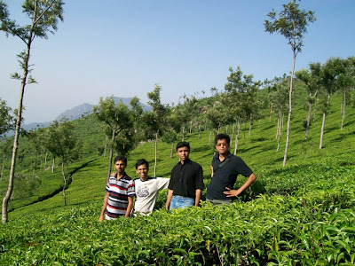 Tea Estates, Dolphin's nose