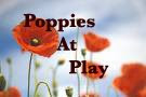 Poppies At Play