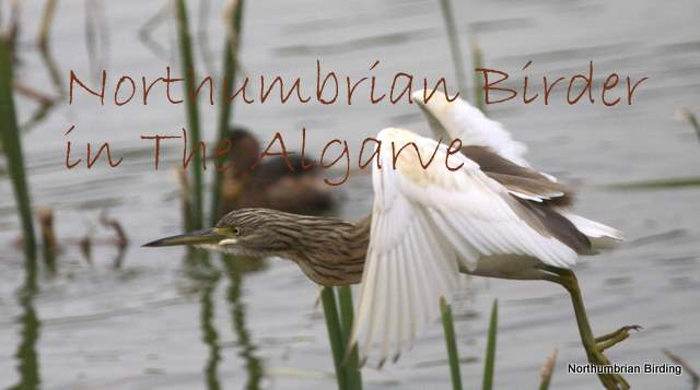 Northumbrian Birder in The Algarve