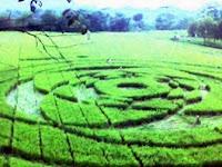 Siapa Dalang Pembuatan 'Crop Circle' di Indonesia