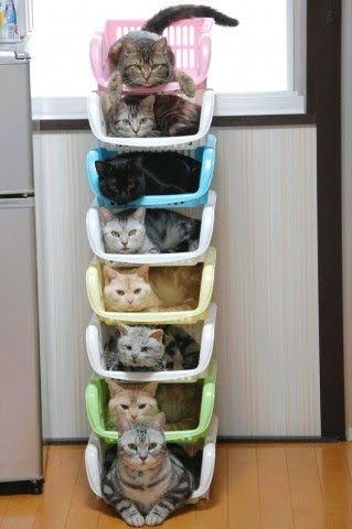 organize cat funny kitten pic