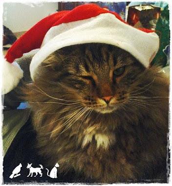 Votum!!!! Ein klares Nein für Tiere unterm Weihnachtsbaum