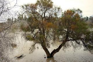 Parque fluvial inundado (La Barca de la Florida)