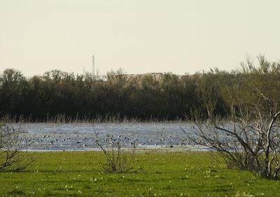 Laguna de 'Los Tollos' (El Cuervo)