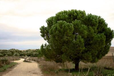 Entorno de la Laguna de Medina