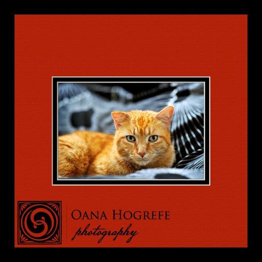pet portraits northeast atlanta