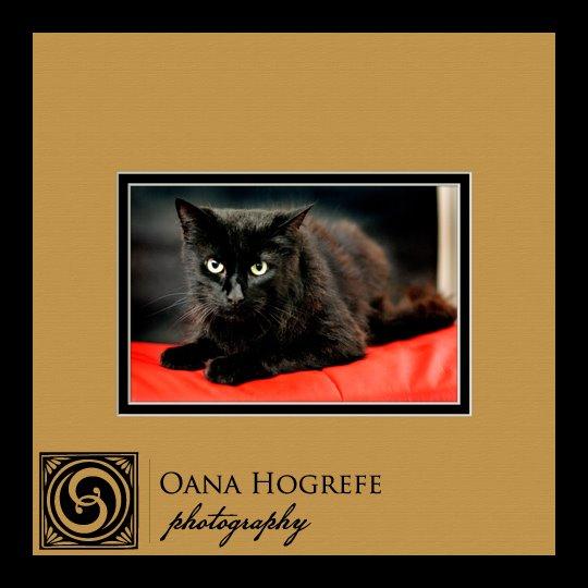 cat photography midtown atlanta