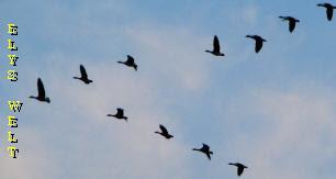 crane, kraniche