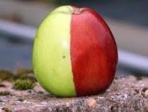 apel langka 2 warna hasil mutasi