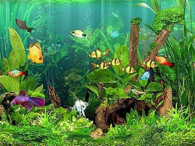 Freshwater Aquariums - Tips For Algae Control Picture Record