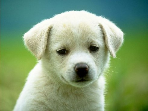 Training Puppies on Animal And Pet Blogs  5 Puppy Training Tips For A Better Dog