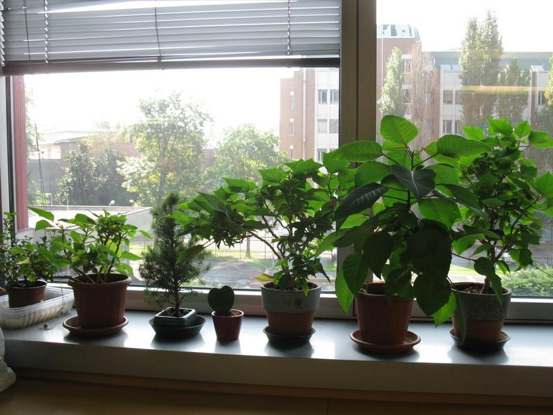 Ildorico 27 ottore 2010 piante da ufficio - Piante per ufficio ...