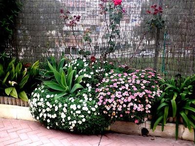 Jardinbio decorando arriates biodinamica - Plantas para arriates ...
