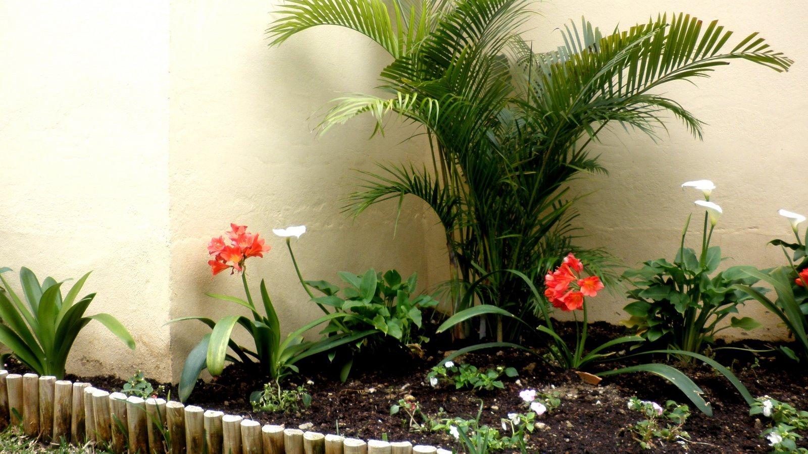 Los elementos de un jardín Plantas para jardines pequeños