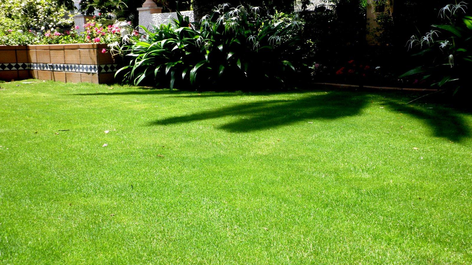Jardinbio c sped tepes y semillas pasados 40 dias - Semillas de cesped para jardin ...