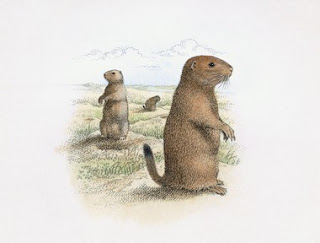 A land ethic: Prairie dog policy changing?