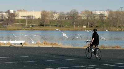 Image of woman bicycling along Rock River near Beloit, Wisconsin