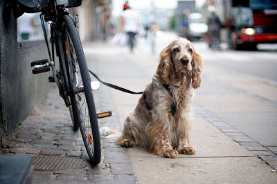 Image of dog with parked bicycle