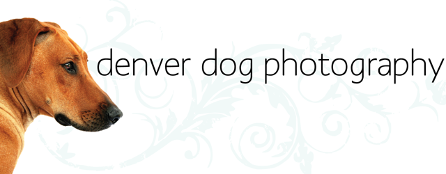 Denver Dog Photography