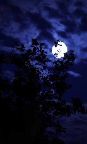torrent moonlight mile