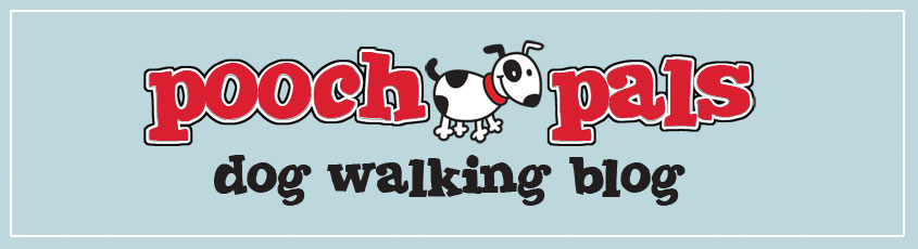 Dog Walkin' Blog