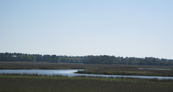 The SC Coastal Marsh