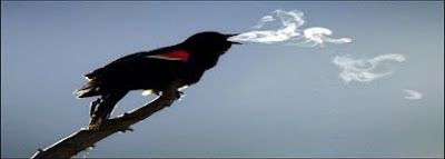 Red-winged blackbird. AP file photo by Robert F. Bukaty