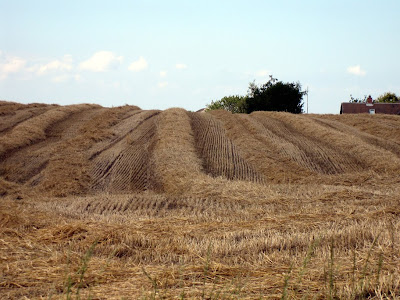 Patterns in harvest fields - Strib, Danmark