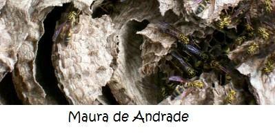 Maura de Andrade