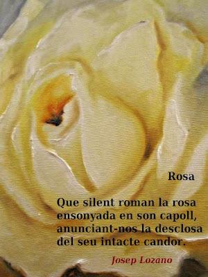 Rosa (Pilar Campmany i Piqué)