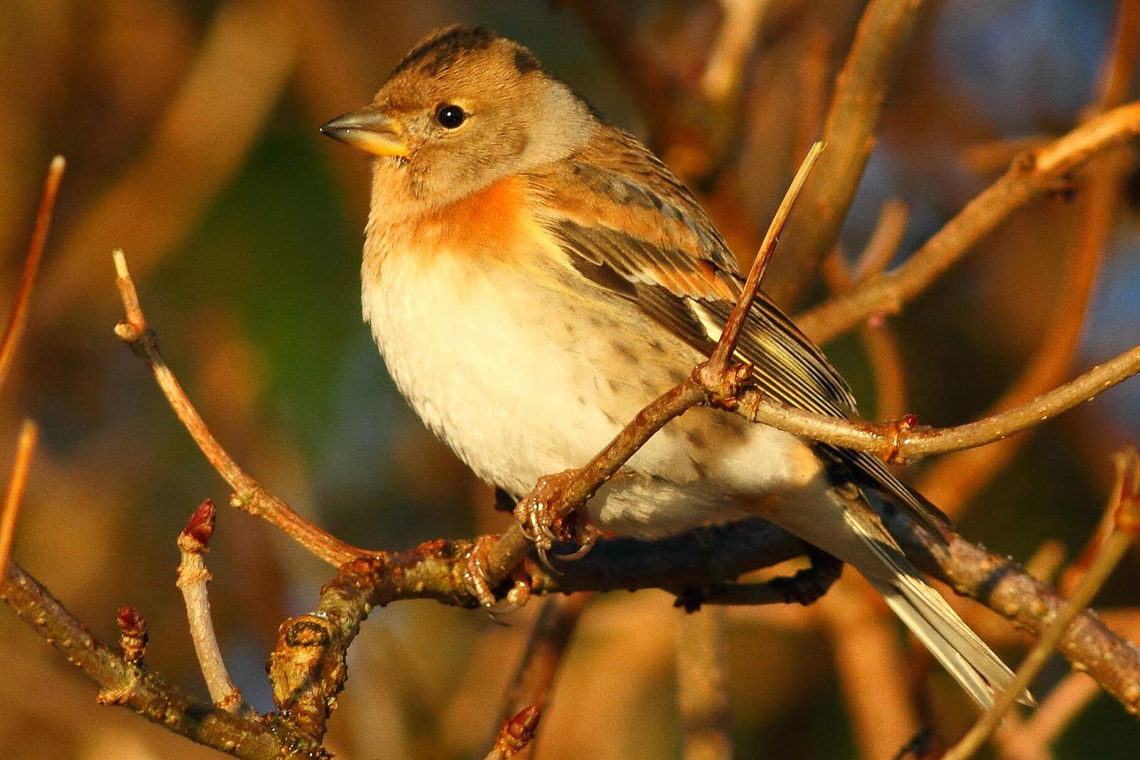 Scarce and rare bird photos