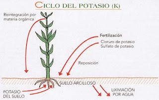 Nicologia 5 ciclo del potasio for Potasio para plantas