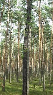 Barwy wiosennego lasu/Colors of spring forrest
