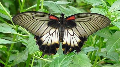 Miasto motyli/Town of butterflies