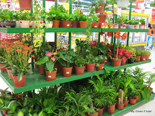 my green finder plant vendors tesco mutiara damansara. Black Bedroom Furniture Sets. Home Design Ideas