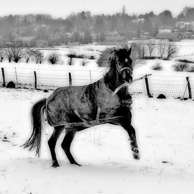 cheval fou avec un bois dans la gueule, crazy horse, photo © dominique houcmant