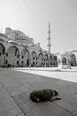 sultanahamet camii Istanbul, Türkiye, blue mosque, la mosquée bleue, istanbul, turquie, photo © dominique houcmant