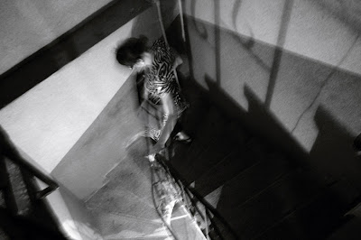 a girl on a dark staircase, une fille dans un sombre escalier, photo © dominique houcmant