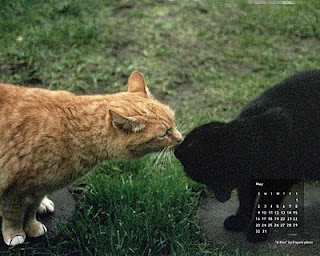 Free feral cat desktop calendar, a kiss