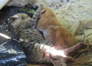 newborn kittens sleeping