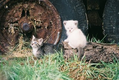 two little feral kittens