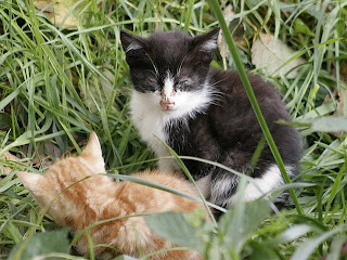 sick kittens