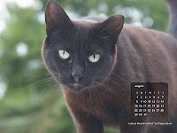Black Feral Cat Free August Wallpaper Desktop Calendar.. click the image, then right click and Save As Desktop Background