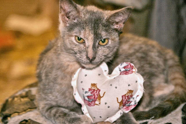 Dora the explorer kitten gets a special Valentines day gift, a heart shaped cat toy!