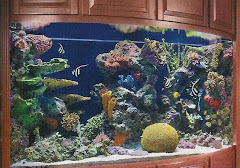 Tim and Tracy's 650 Gallon Aquarium